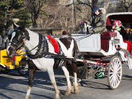horse dran carrage