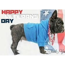 vet-day-dog